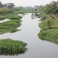 ビエンチャンの湿地