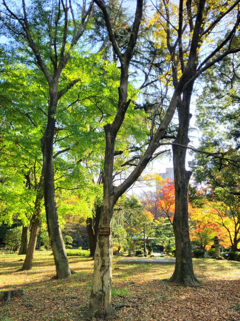 日比谷公園、紅葉見頃