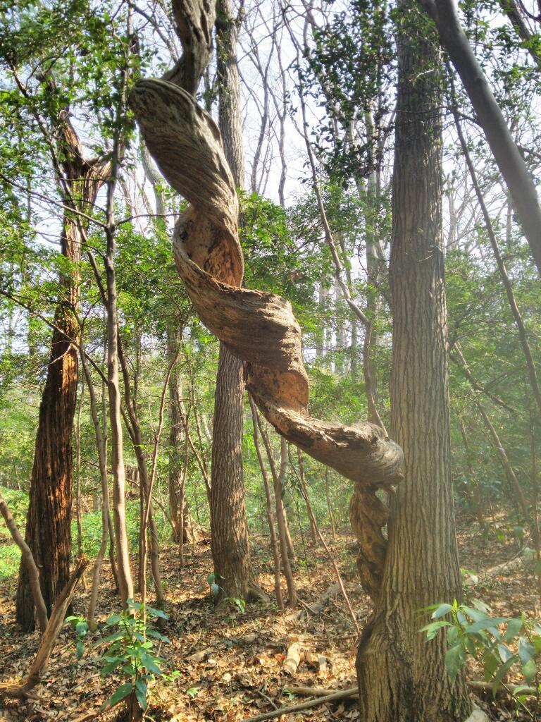 八王子、丹木の雑木林で