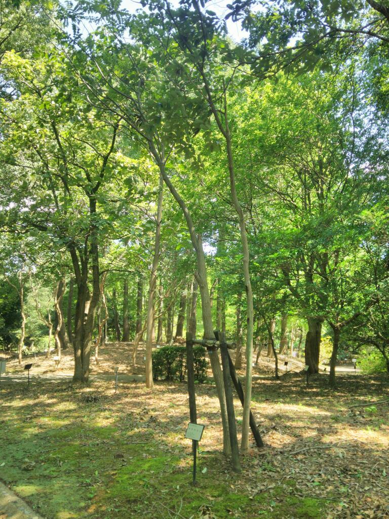 森林総研の小路