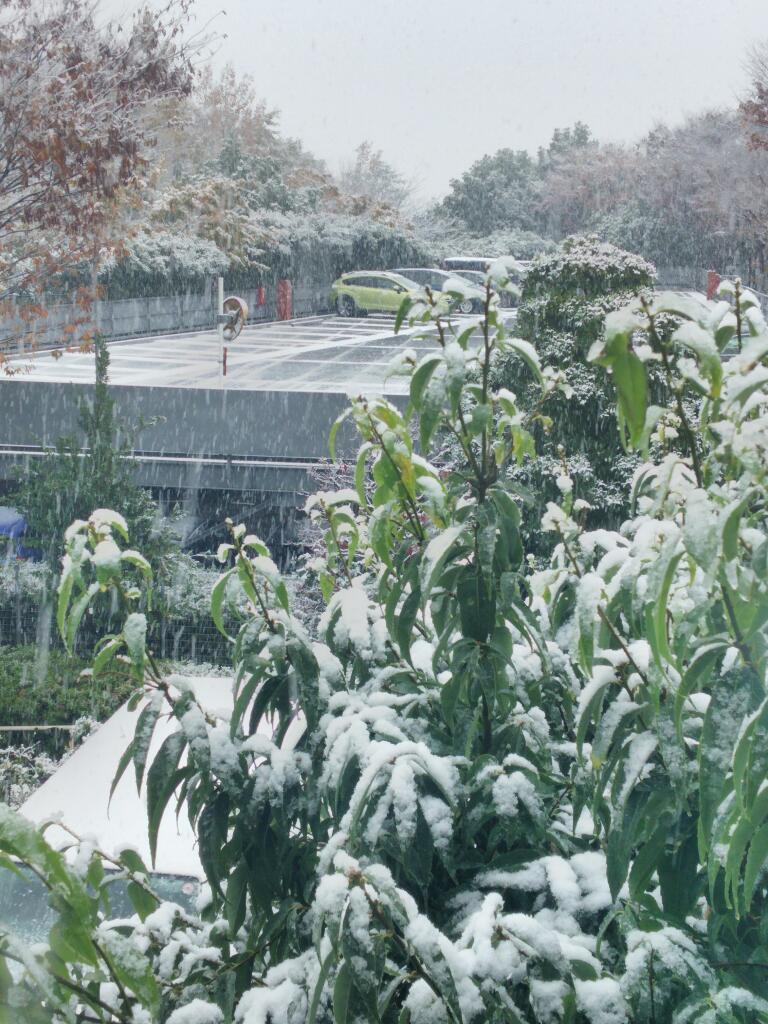 観測史上初!11月に都内冠雪