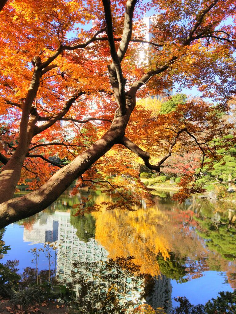 日比谷公園の紅葉が見頃