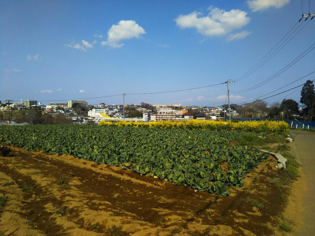 横浜国大の通学路