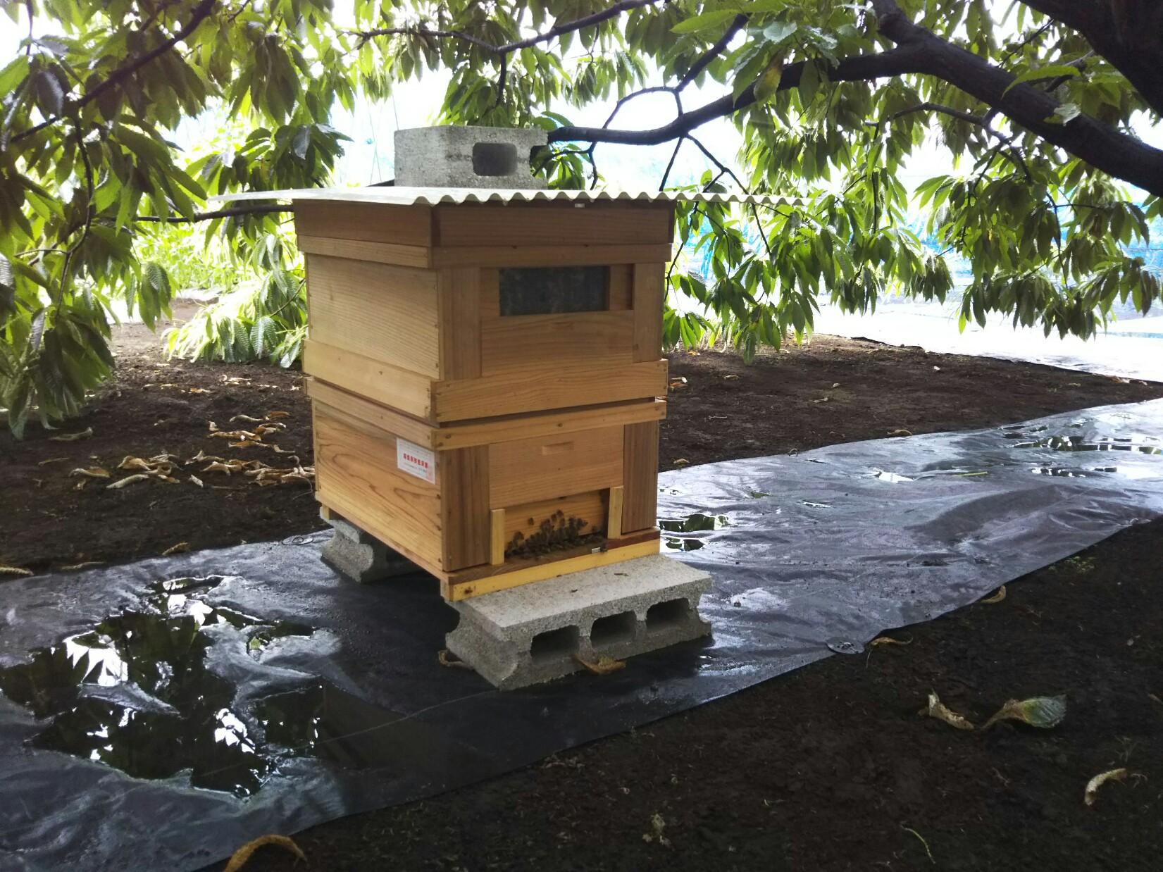 千代田区の養蜂
