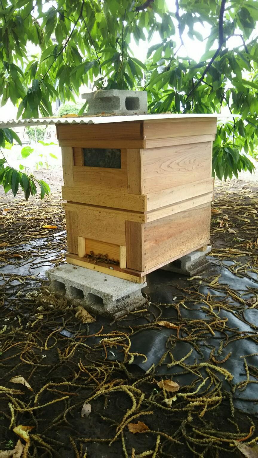 蜜蜂の世話