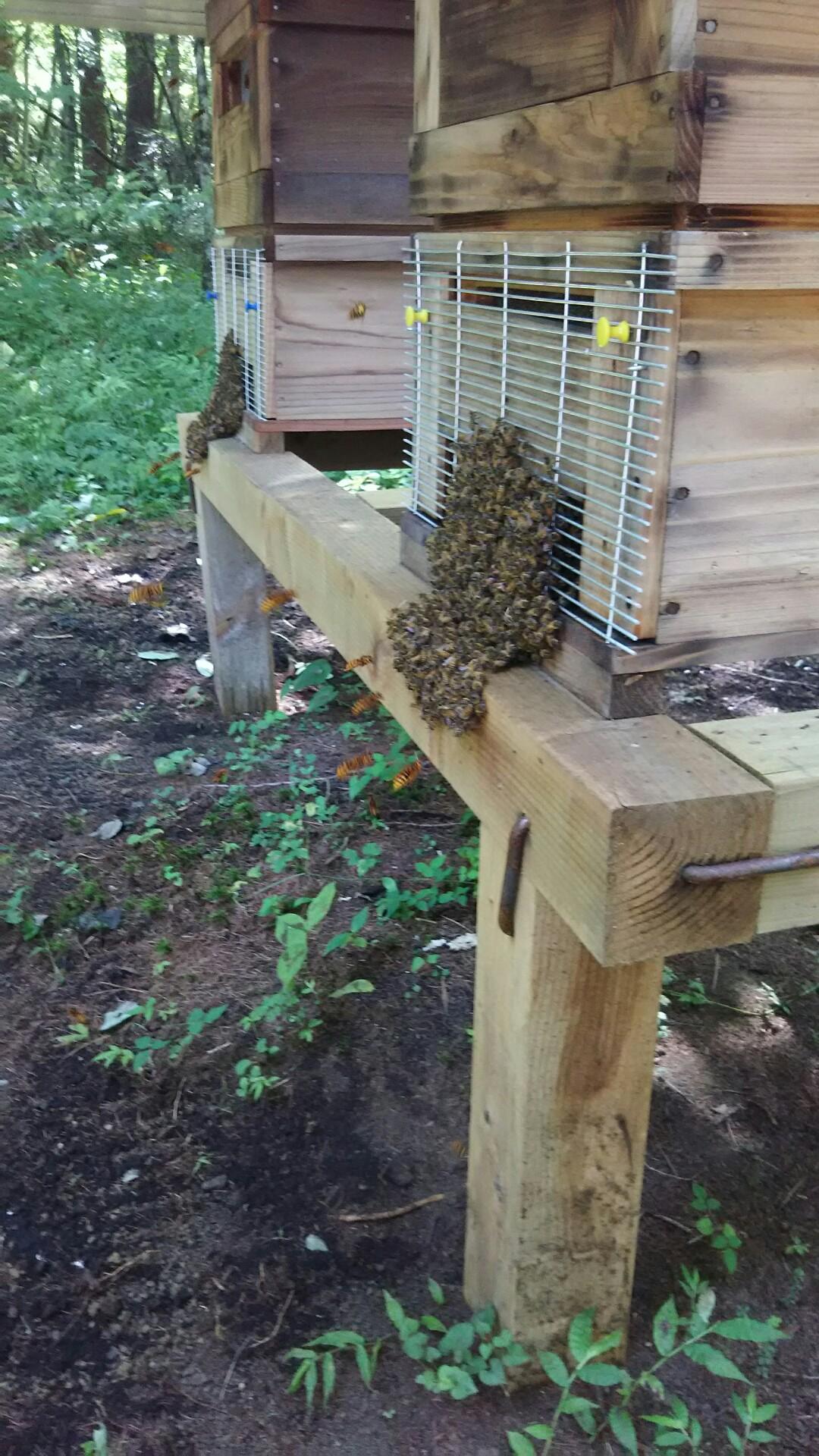 スズメバチの攻撃
