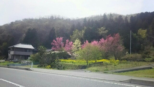 里山の春は何か鬱々としている