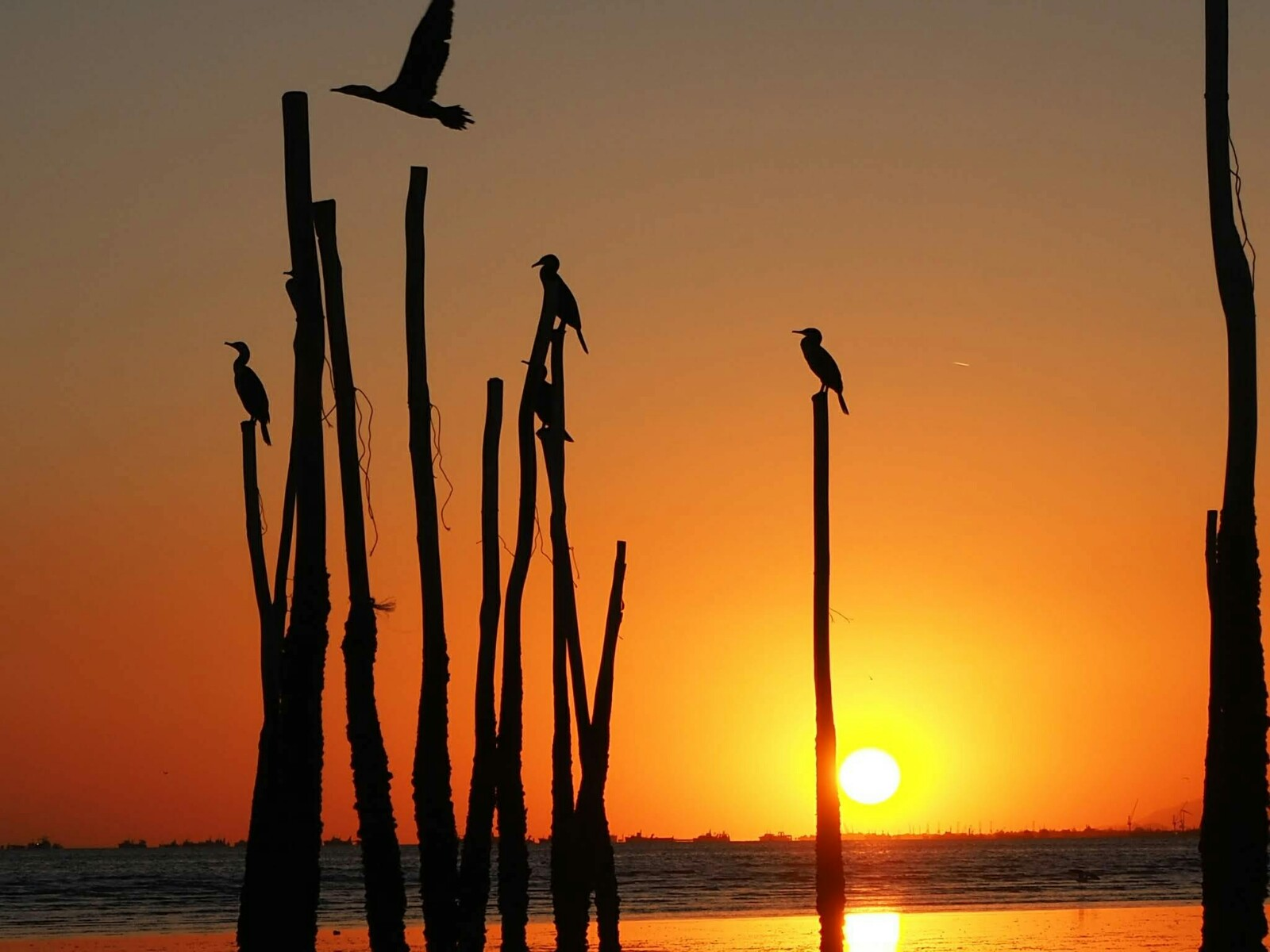 ペルシア湾 冬の野鳥